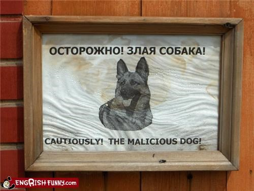 animal dogs russian sign warning - 3991415296