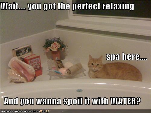 caption,captioned,cat,disbelief,do not understand,perfect,question,relaxing,ruin,spa,spoil,water