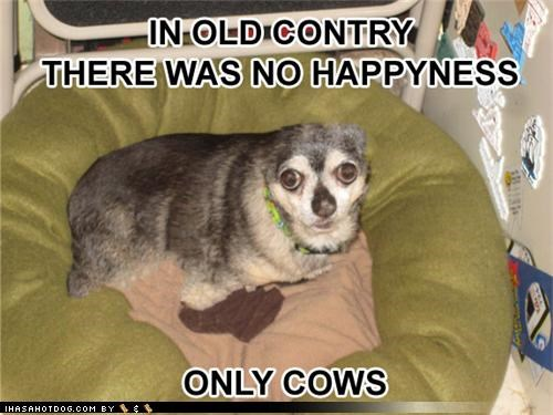 cows happiness in old country no nostalgia remembering Sad whatbreed