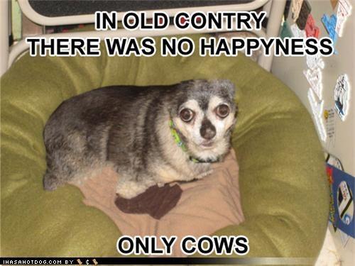 cows happiness no nostalgia remembering Sad whatbreed - 3992425728