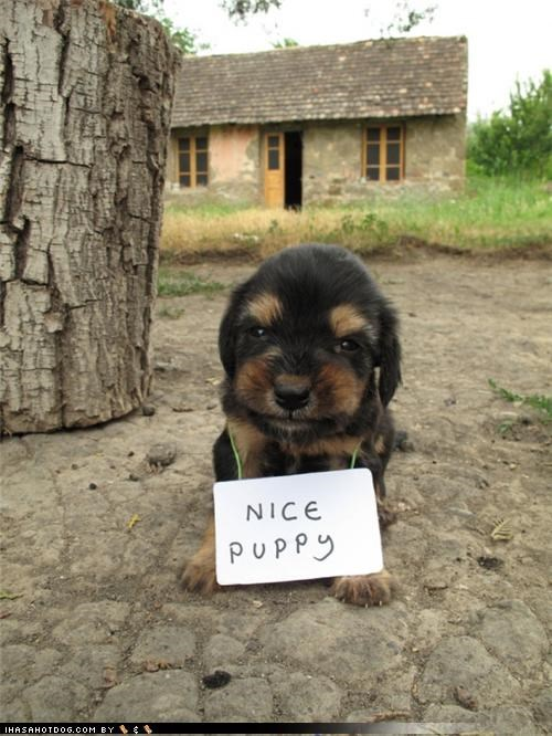 contradiction cute lying nice puppy puppy sign smirk trust whatbreed