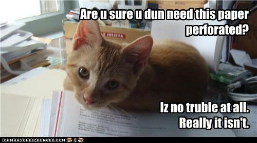 caption,captioned,cat,certainty,double checking,for free,no trouble,paper,perforation,question