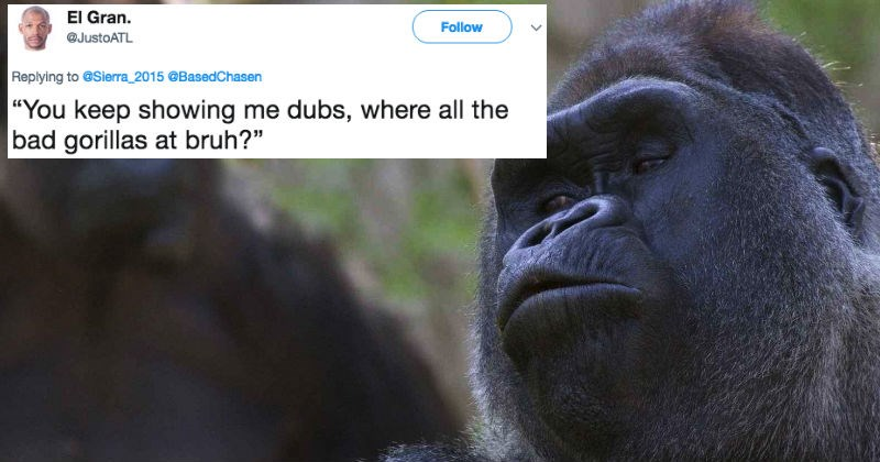 Video of a gorilla swiping through pictures of female gorillas is a hilarious representation of every thirsty guy on Tinder.
