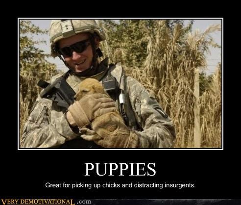 animals cute hilarious insurgents just-kidding-relax picking up chicks puppies soldier war - 3994626816