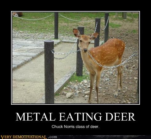 animals,biology,chuck norris,deer,metal,Terrifying