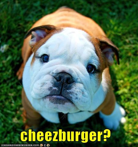 Cheezburger Image 3995471872