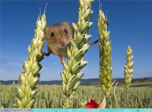 field mouse mouse nerd jokes - 3995574272