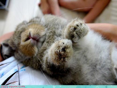 bunny Day of Rest sleep - 3995576320