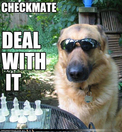 awesome checkmate chess Deal With It german shepherd sunglasses - 3995624960