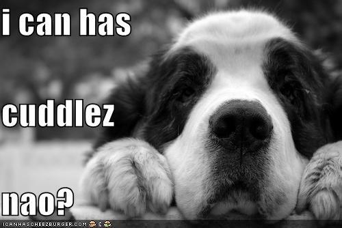 cuddles do want i can has puppy puppy eyes Sad saint bernard themed goggie week - 3995857408