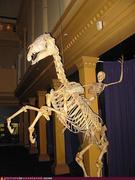 bones,Bonesy,mount,skeleton,steed,undead,WoW,wtf