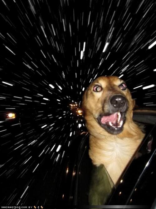 anatolian shepherd car funny face Hall of Fame photoshop warp speed window - 3996258304