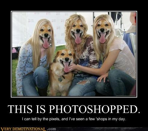 dogs face hilarious photoshop wtf - 3996792576