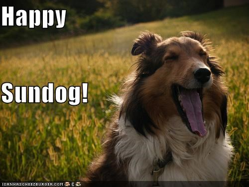 collie,field,happy,happy sundog,smiling,tongue