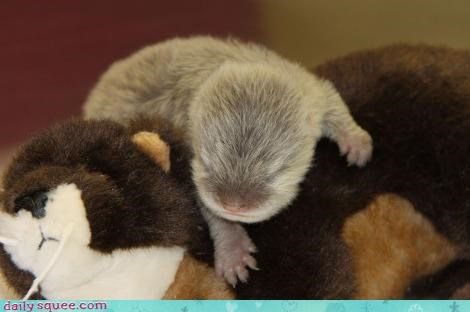 baby otter pup - 3997018624