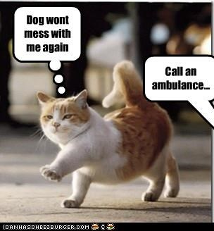 Dog wont mess with me again Call an ambulance...