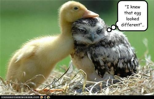 caption,captioned,duck,egg,looked different,Owl,should have known,suspicious