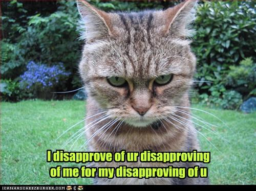 angry caption captioned cat disapproval disapprove disapproving glaring - 3998475520