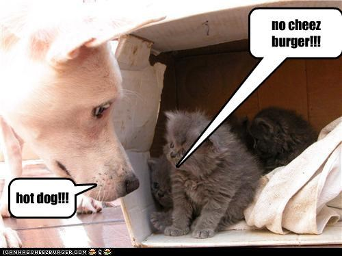 Cheezburger Image 3998501632