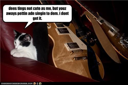 affection caption captioned cat cute doesnt-understand guitar not as cute as me petting singing - 3998579456