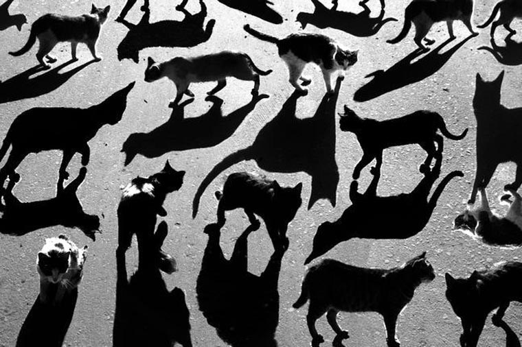 Street Art art shadow animals - 3998725