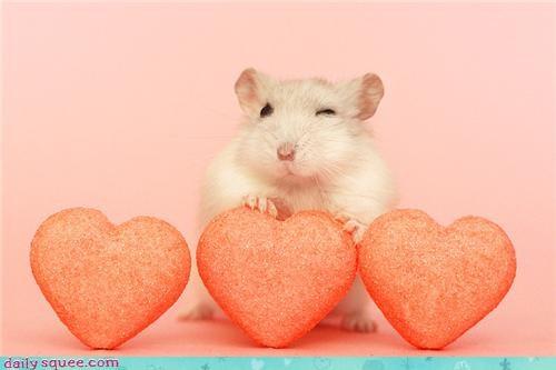 face,hamster,wink