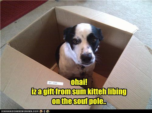 ohai! iz a gift from sum kitteh libing on the souf pole..