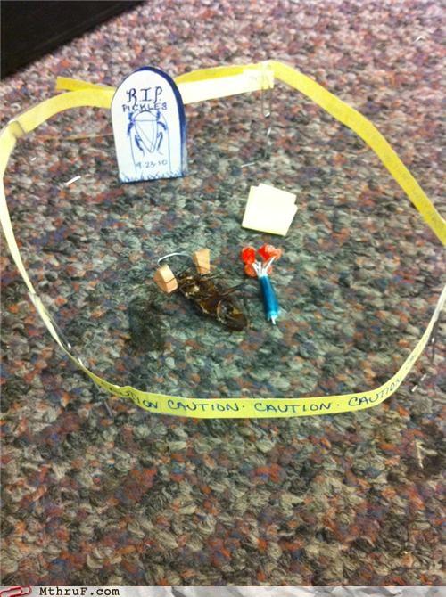cockroach crime scene dead - 3998946304