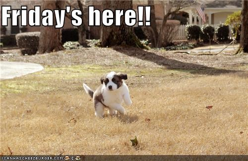 excited FRIDAY happy puppy running saint bernard themed goggie week - 3999268352