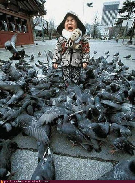 animals birds Japan kids OverKill 9000 scary wtf - 3999271936