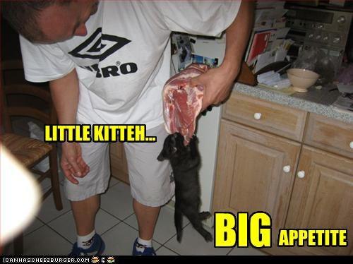 LITTLE KITTEH... BIG APPETITE