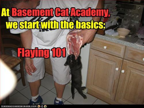 101 class,basement cat,basement cat academy,basic,beginners,caption,captioned,cute,flaying,kitten,steak
