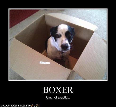 BOXER Um, not exactly...