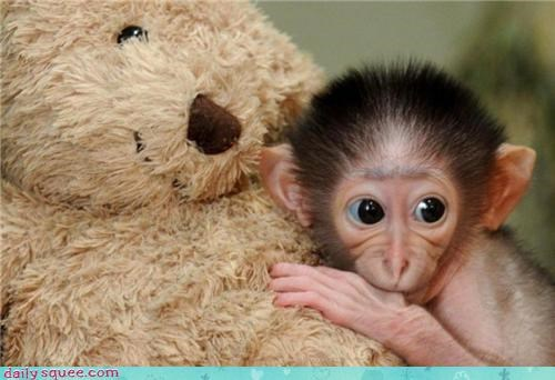 baby,monkey,thumb