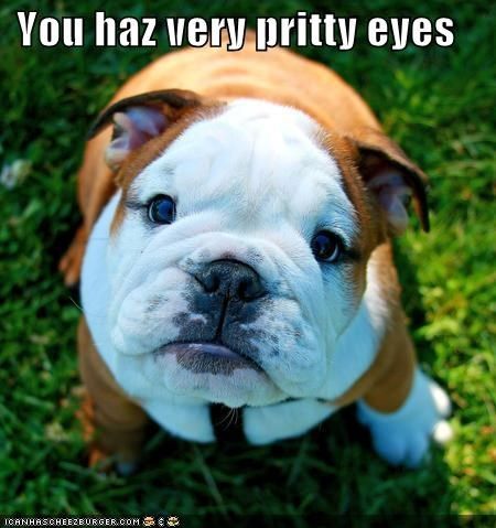 bulldog captivating compliment eyes getting lost pretty Staring