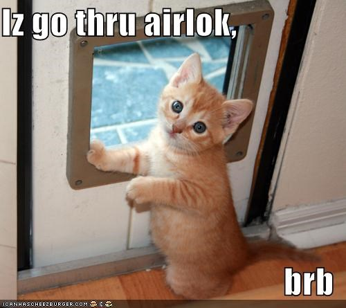air lock,brb,caption,captioned,cat door,exploring,going,kitten,no big deal,through