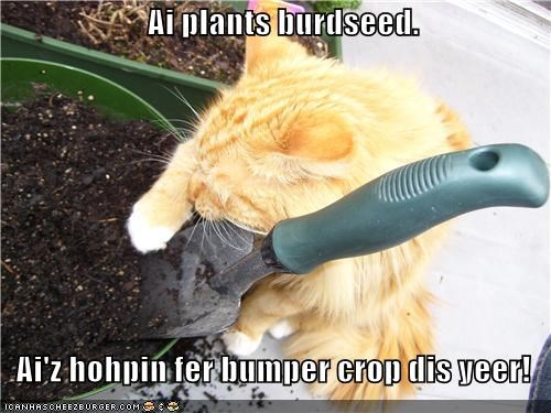 bird seed,bumper crop,caption,captioned,cat,harvesting,hoping,planting