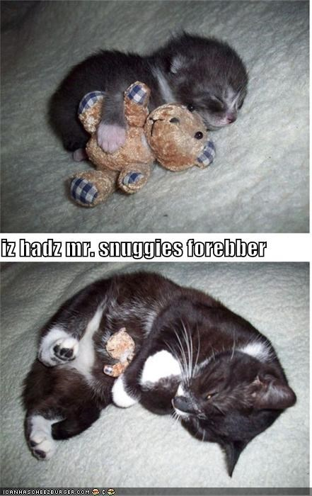 after before caption captioned cat cute forever love now possession teddy bear then toy - 4002012672