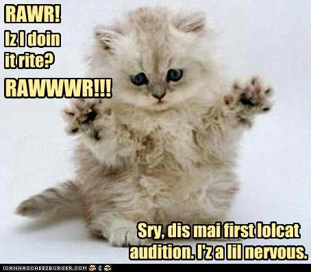 audition caption captioned cat cute lolcats nervous rawr scary trying too hard