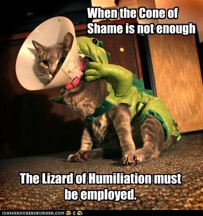 caption captioned cat cone of shame humiliation lizard of humiliation not enough shame