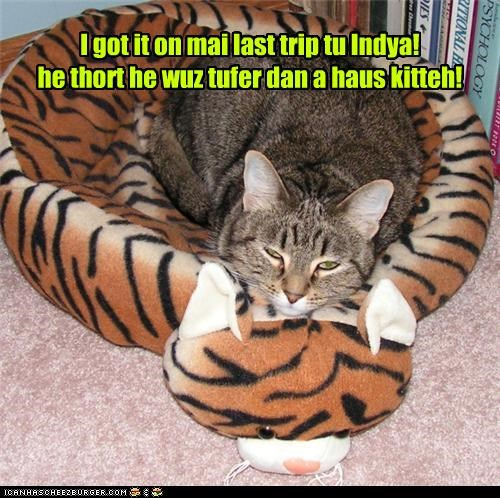caption captioned cat got it house cat india last thought tiger trip trophy - 4002777344