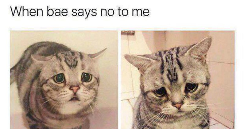 Hilarious Cat Memes That Are Total WINs