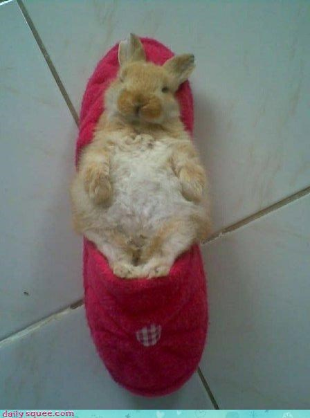 bunny,naps,rubbins,slipper