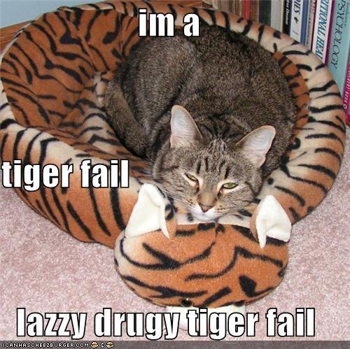 Cheezburger Image 4003474432