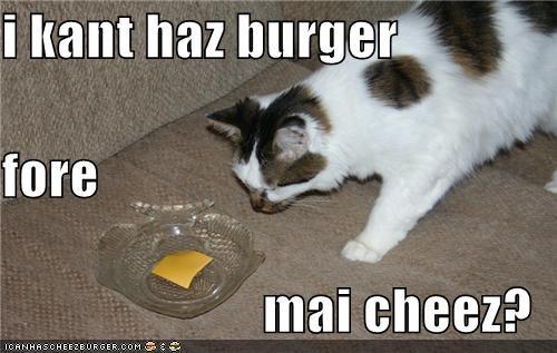 Cheezburger Image 4003974400