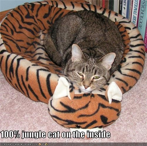 Cheezburger Image 4004462336