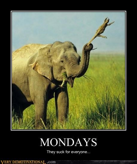 animals,elephants,grass,lizard,mondays,Terrifying,why bother