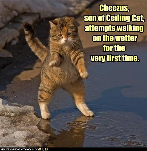 attempts,caption,captioned,cat,ceiling cat,first,first time,pun,son,time,walking,water