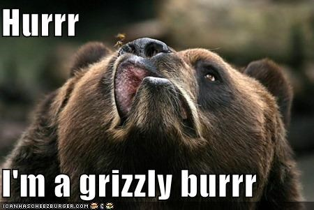 brown burrr burrrr critters grizzly is he sneezing naturrr polurrr burrr - 4005991168