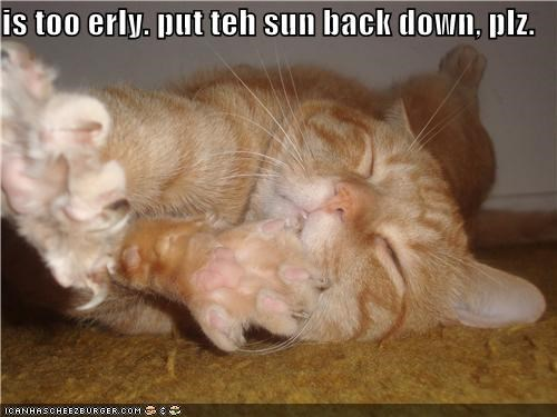 asking,caption,captioned,cat,early,not awake,please,put it back,sleeping,sun,upset,waking up
